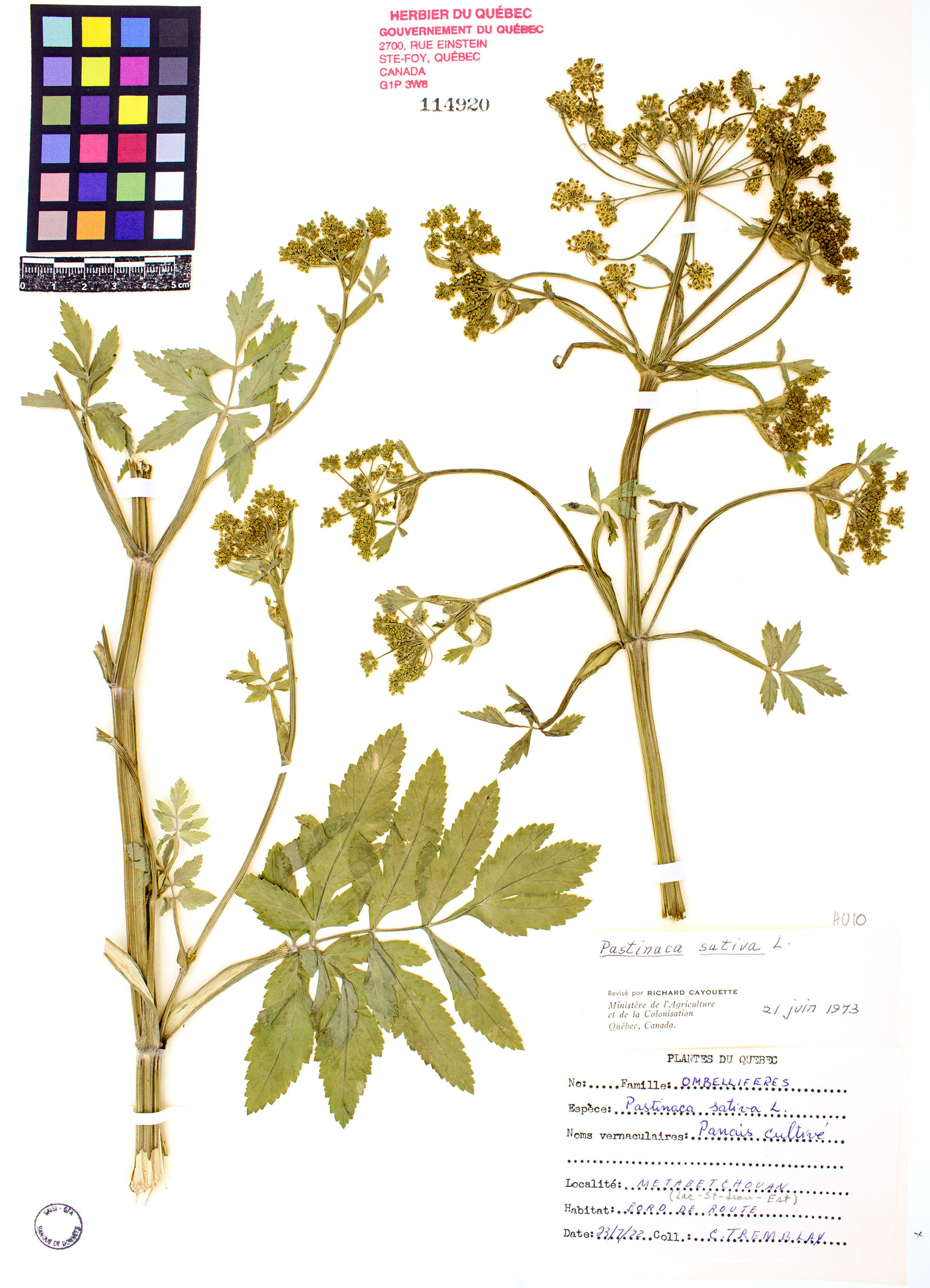 noms vernaculaires des plantes